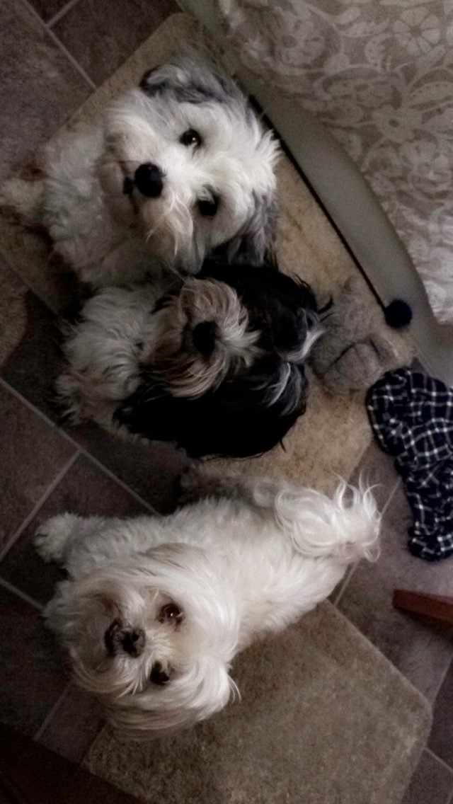 dogs051816